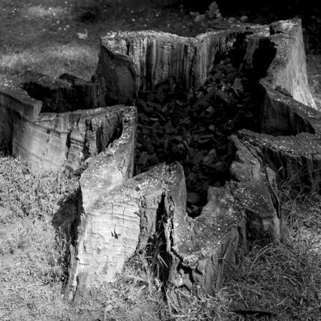 Coal Tree Salt Sea - Sarah Rhys - in Abergavenny Museum