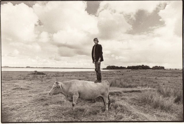 Alan's Cow, 1986 - Tom Wood